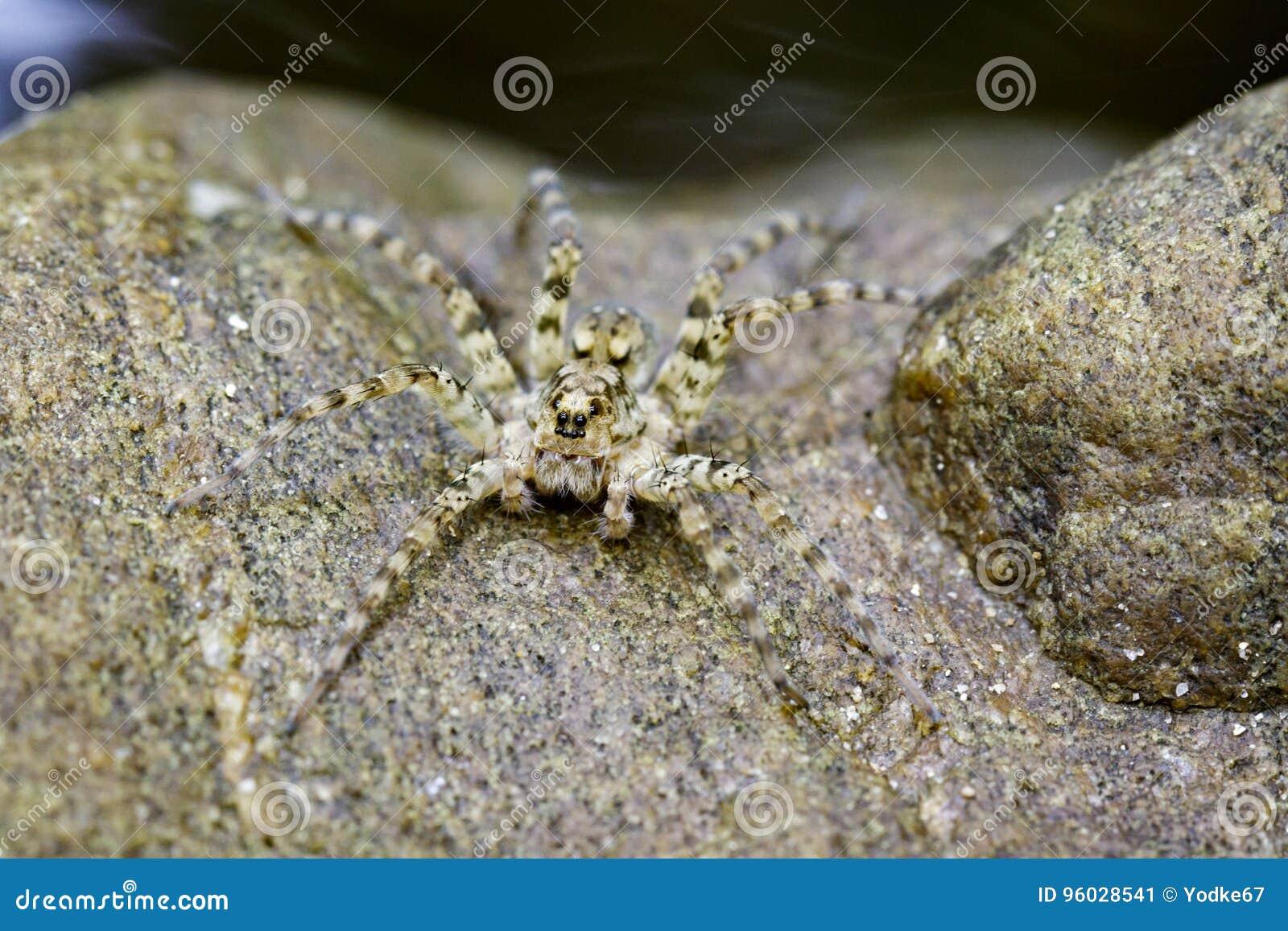 Wizerunek Rzeczni Huntress pająki na skale