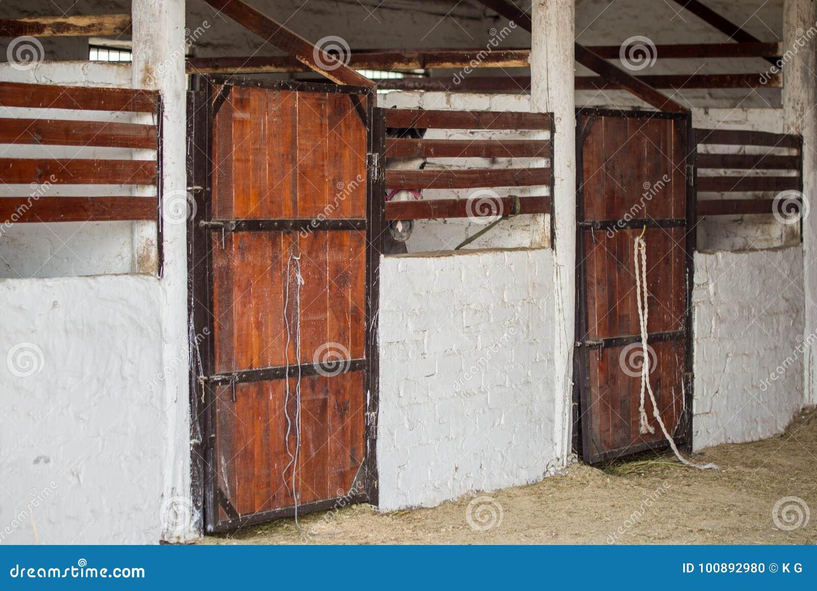 Wnętrze stara nieociosana stajenka i głowa koński senn przez drewnianego ogrodzenia
