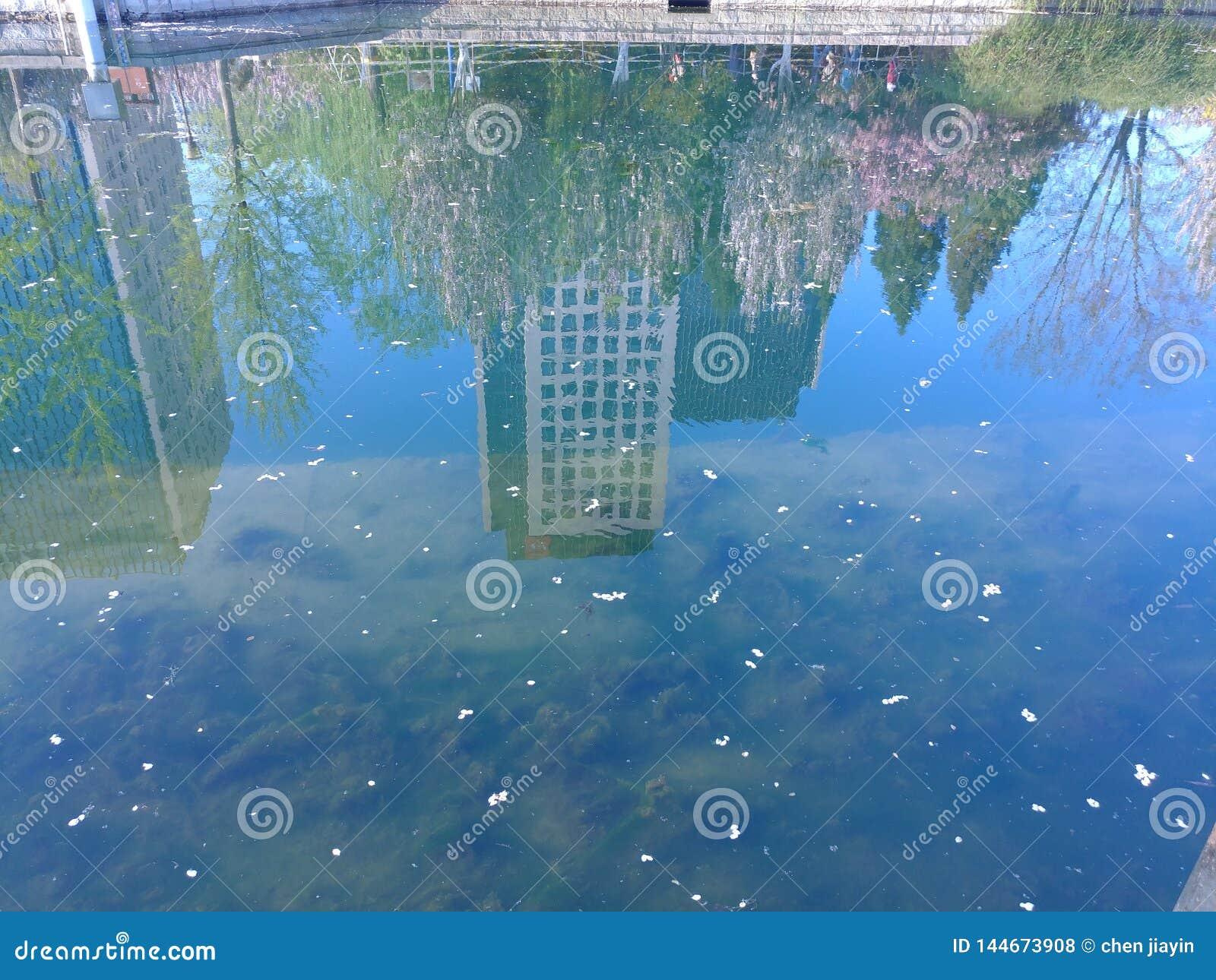Woda jest lustrem który łączy wodnego świat z podwodnym światem