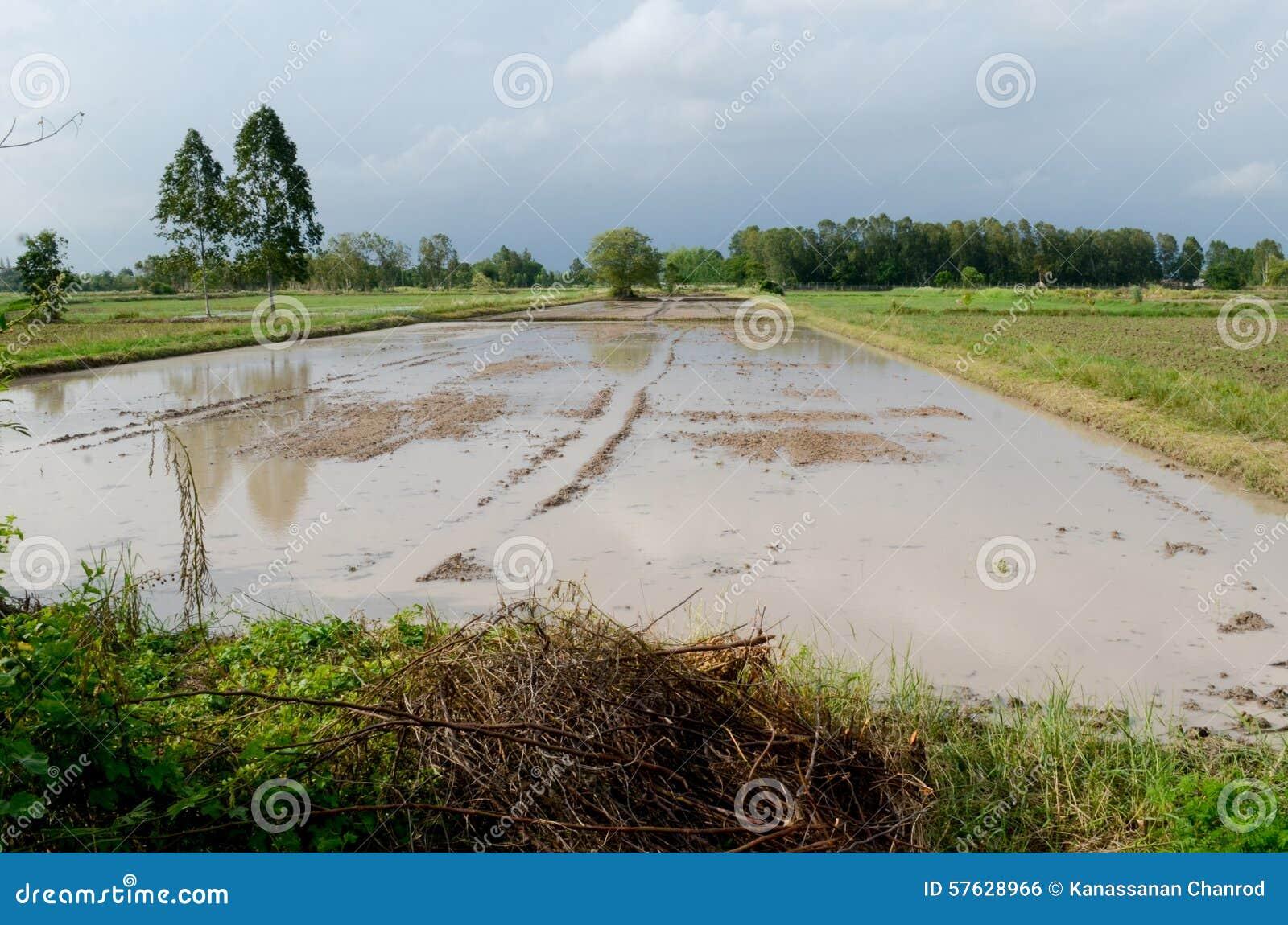 Woda notująca na polu