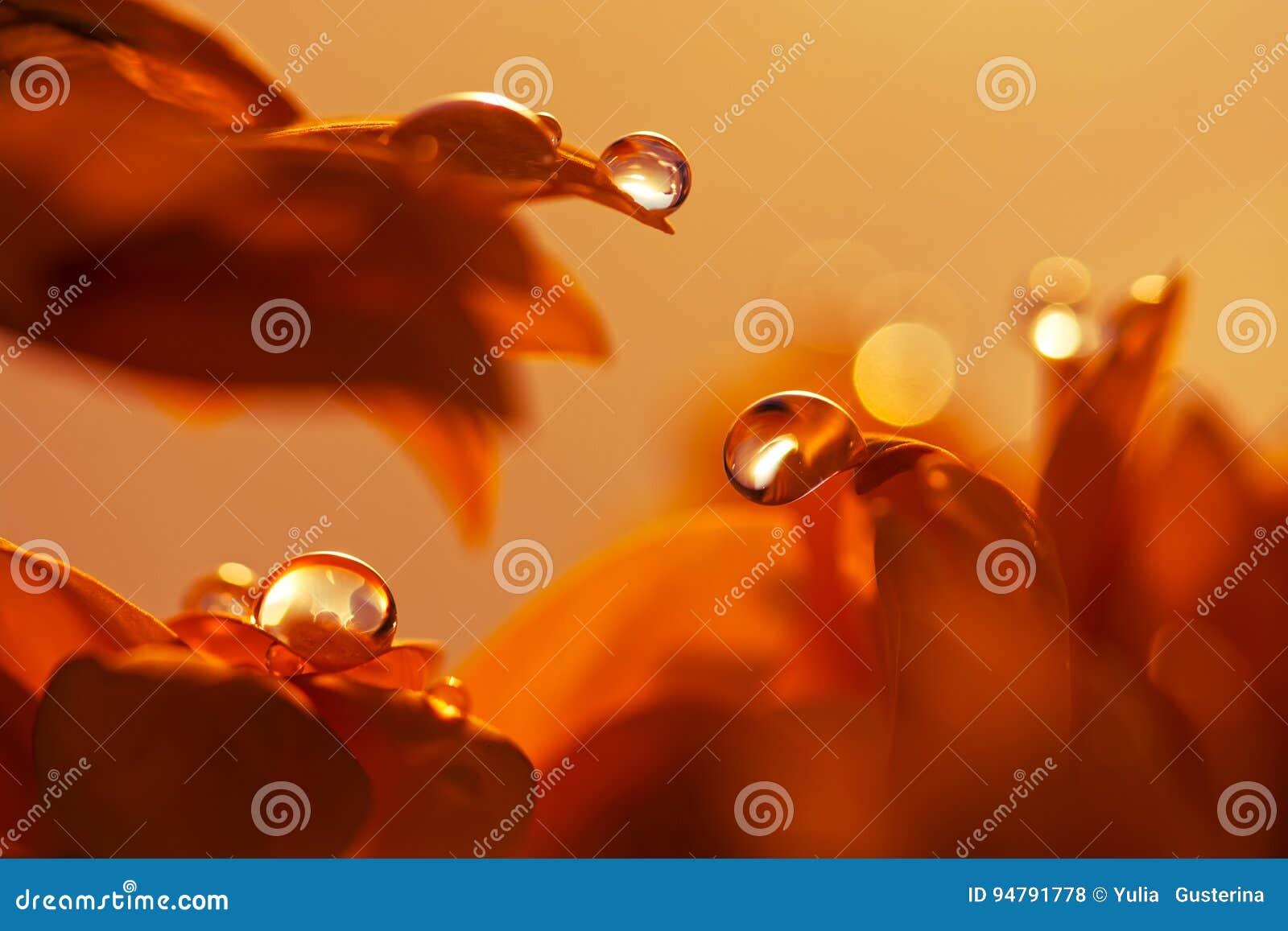 Wodna kropla na czerwonym kwiatu płatku Makro- krople
