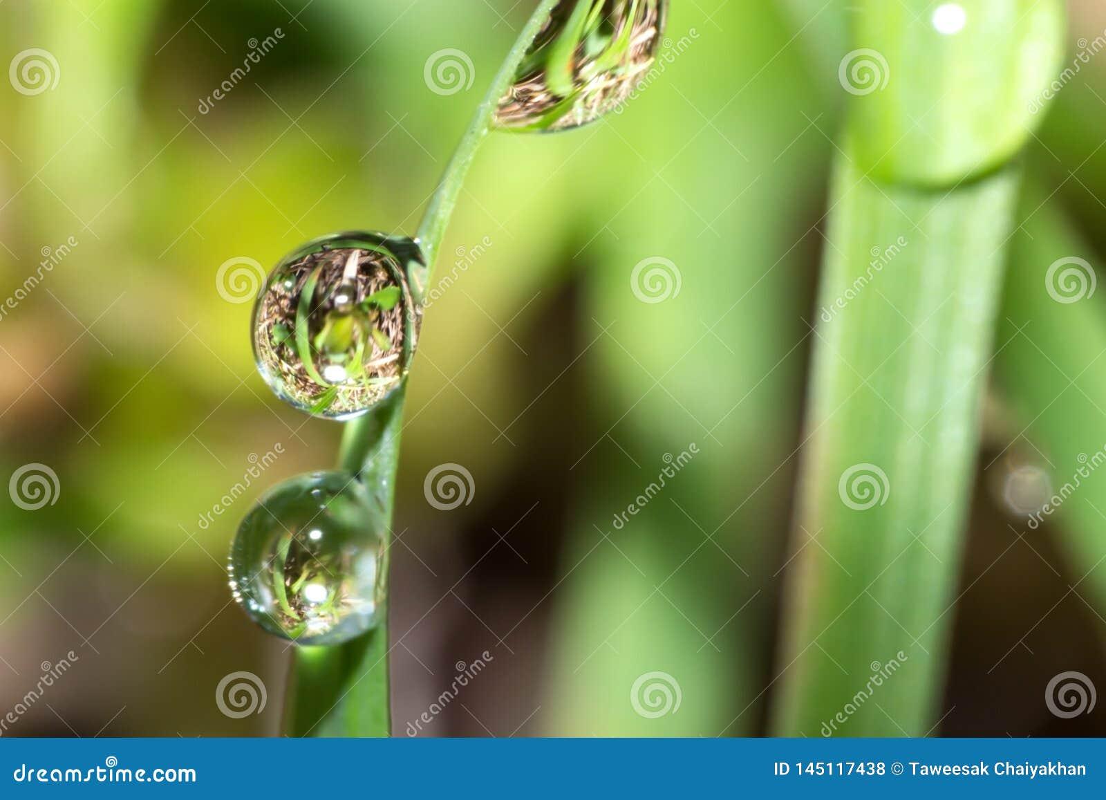 Wodna kropla na trawie, makro- wody kropla