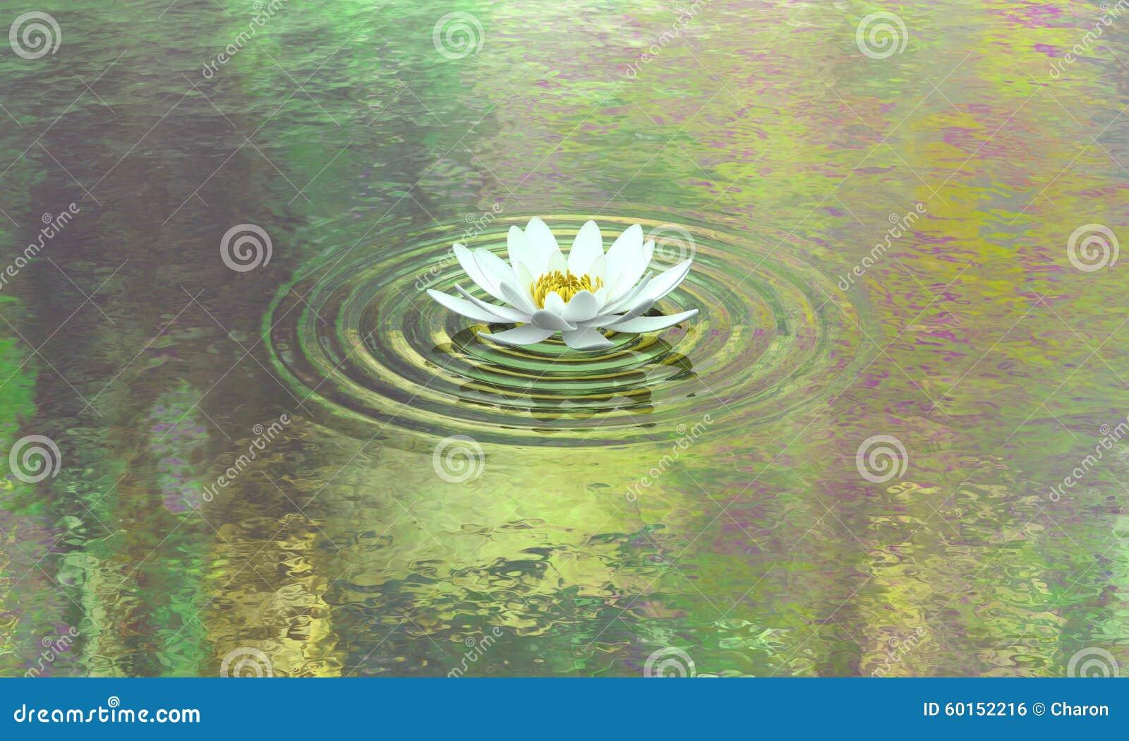 Wodnej lelui stawu czystość i spokój