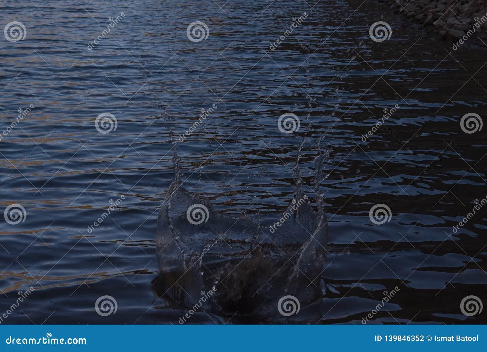 Wodny pluśnięcie w rzece