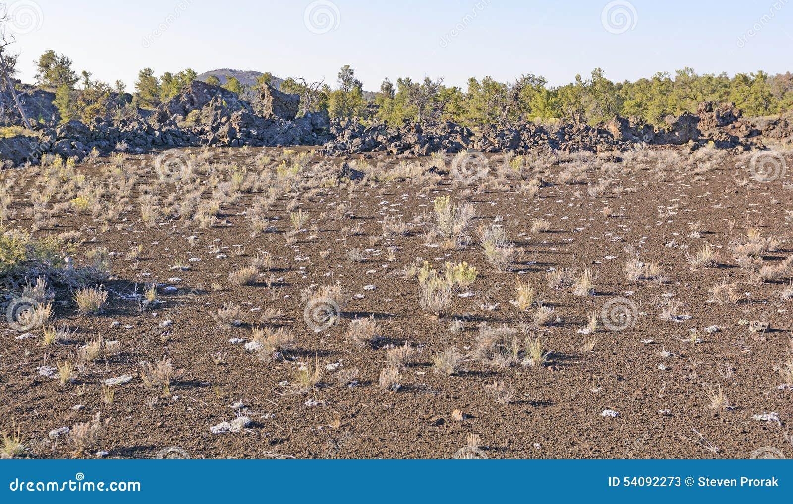 Woestijngrassen op een Vulkanisch Landschap