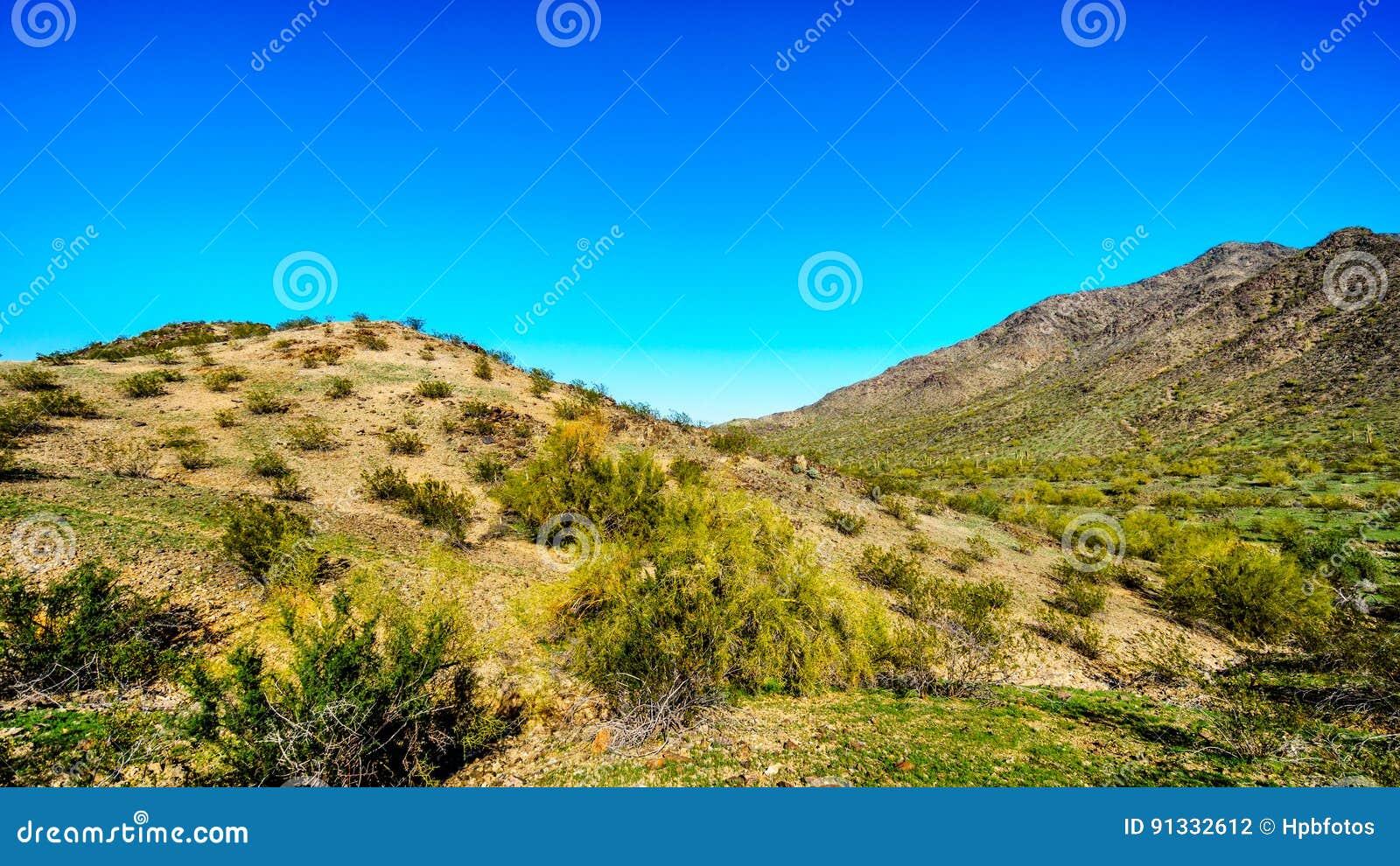 Woestijnlandschap met Saguaro-Cactussen langs de Nationale Sleep dichtbij San Juan Trail Head in de bergen van het Park van de Zu