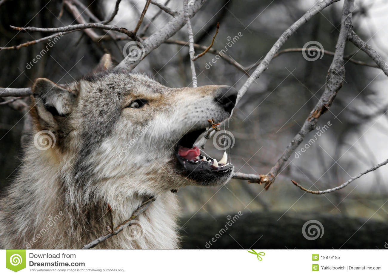 how to stop wolf biting