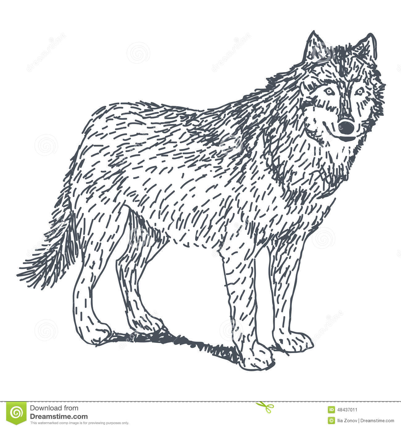Wolf Drawing Stock Vector - Image: 48437011 Angry Black Wolf Drawing