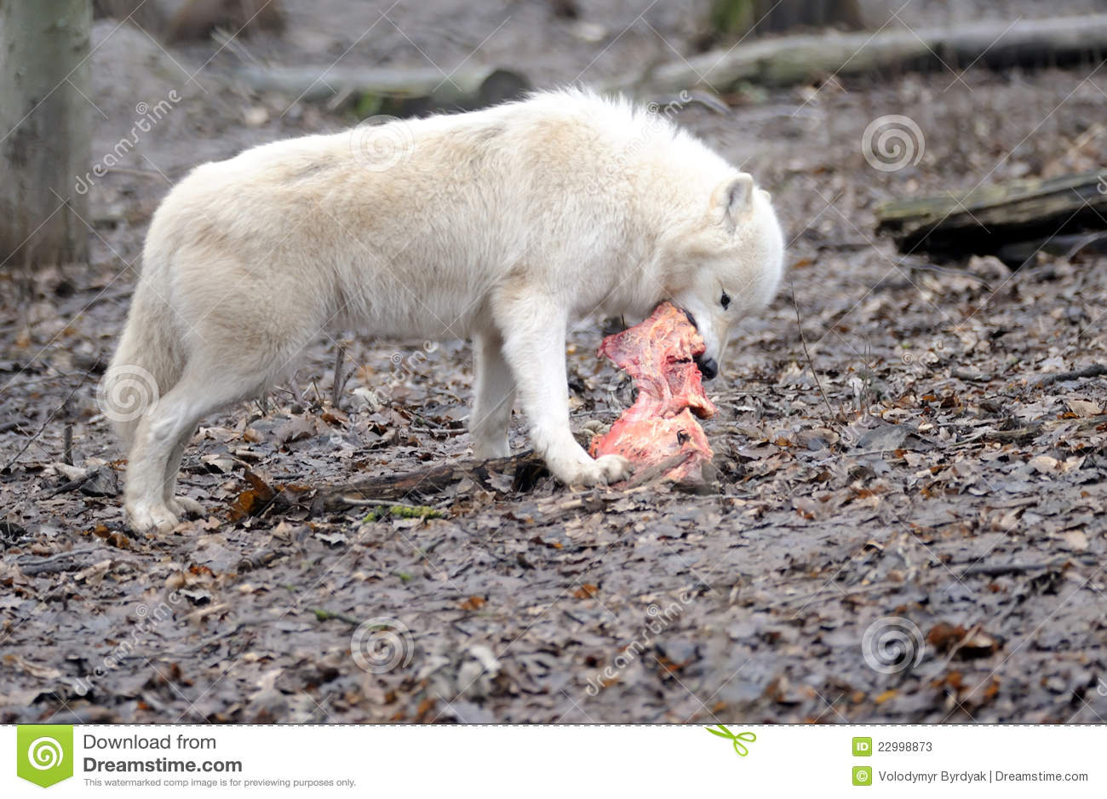 how to eat tapir meat