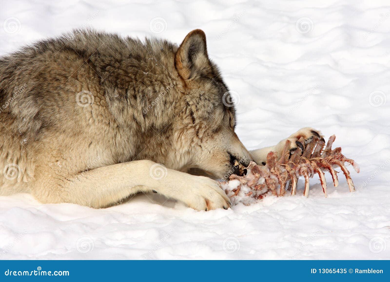 Furry картинка