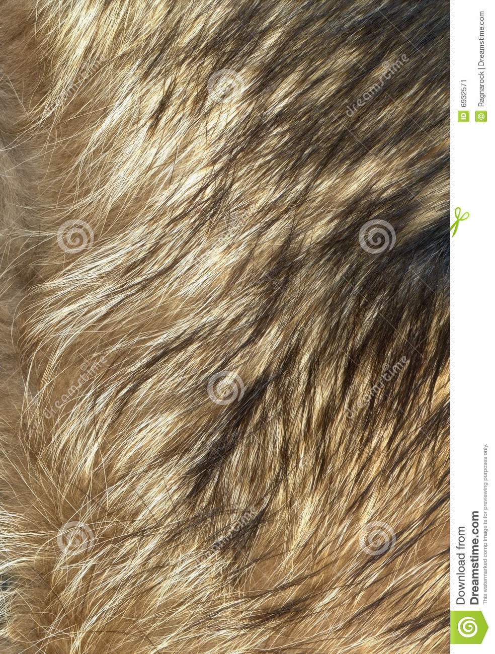 Wolf Fur Texture To Background Stock Image - Image: 6932571
