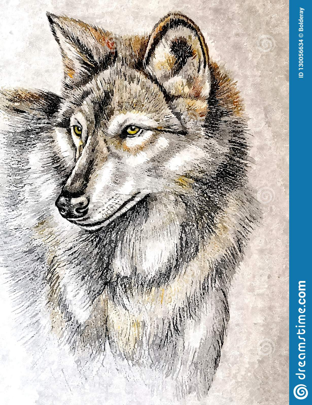 Wolf Or Gray Wolf Portrait Painting Wet Watercolor On