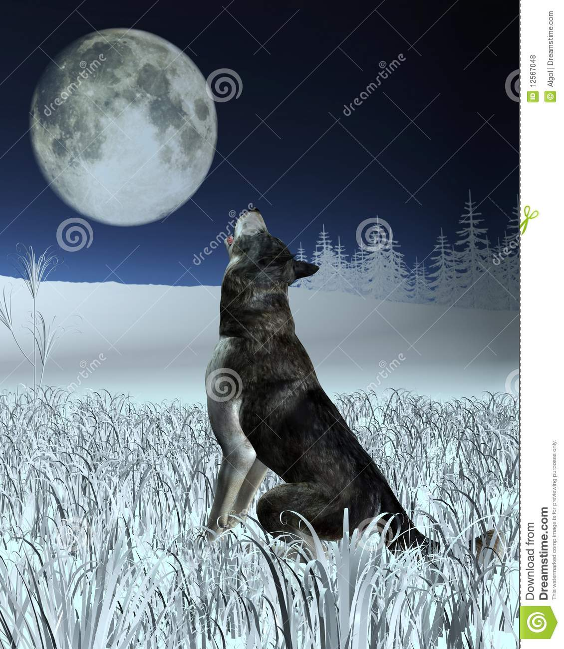 wolf howling at the full moon royalty free stock photos image