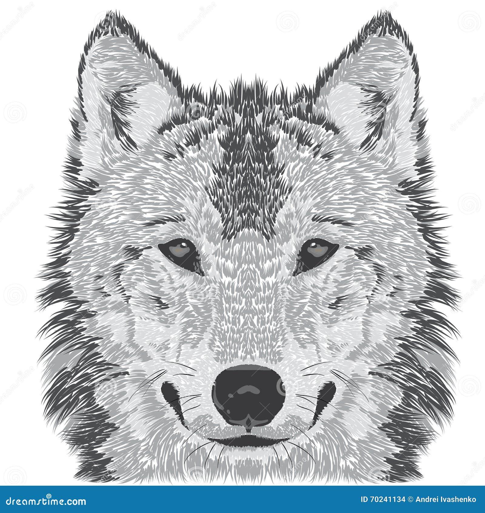 Beautiful wolfs face vector illustration