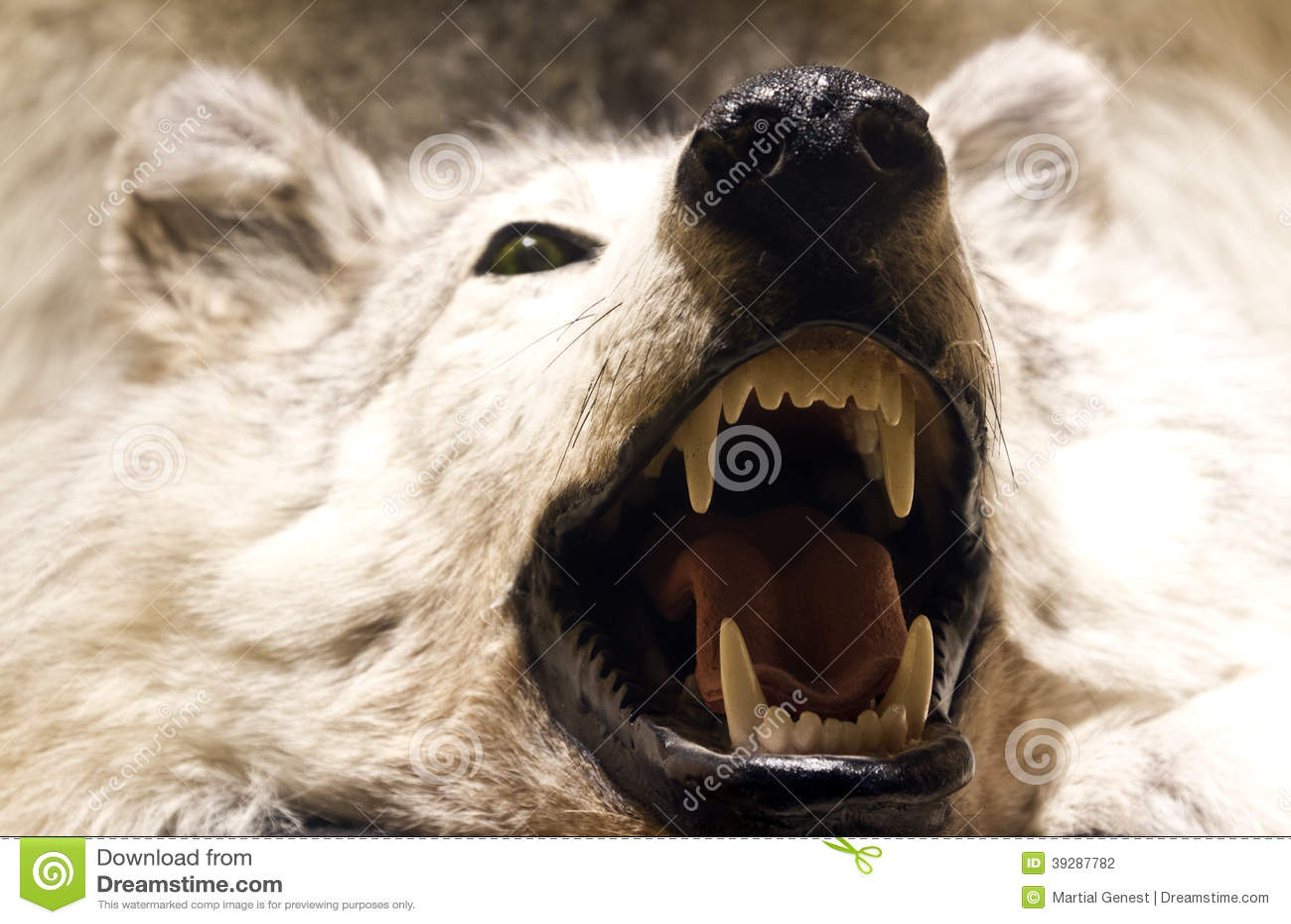 Maw Of An Animal
