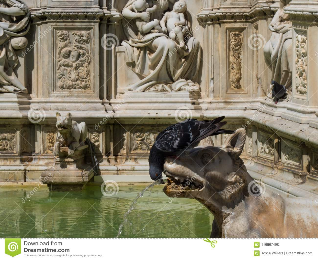 Ancient Gaia Statue wolf and pigeon in fountain siena stock photo - image of