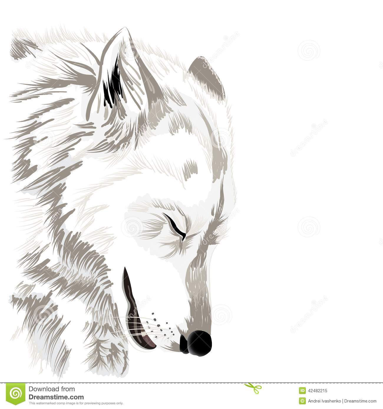 Sketch of a wolfs faceon white background