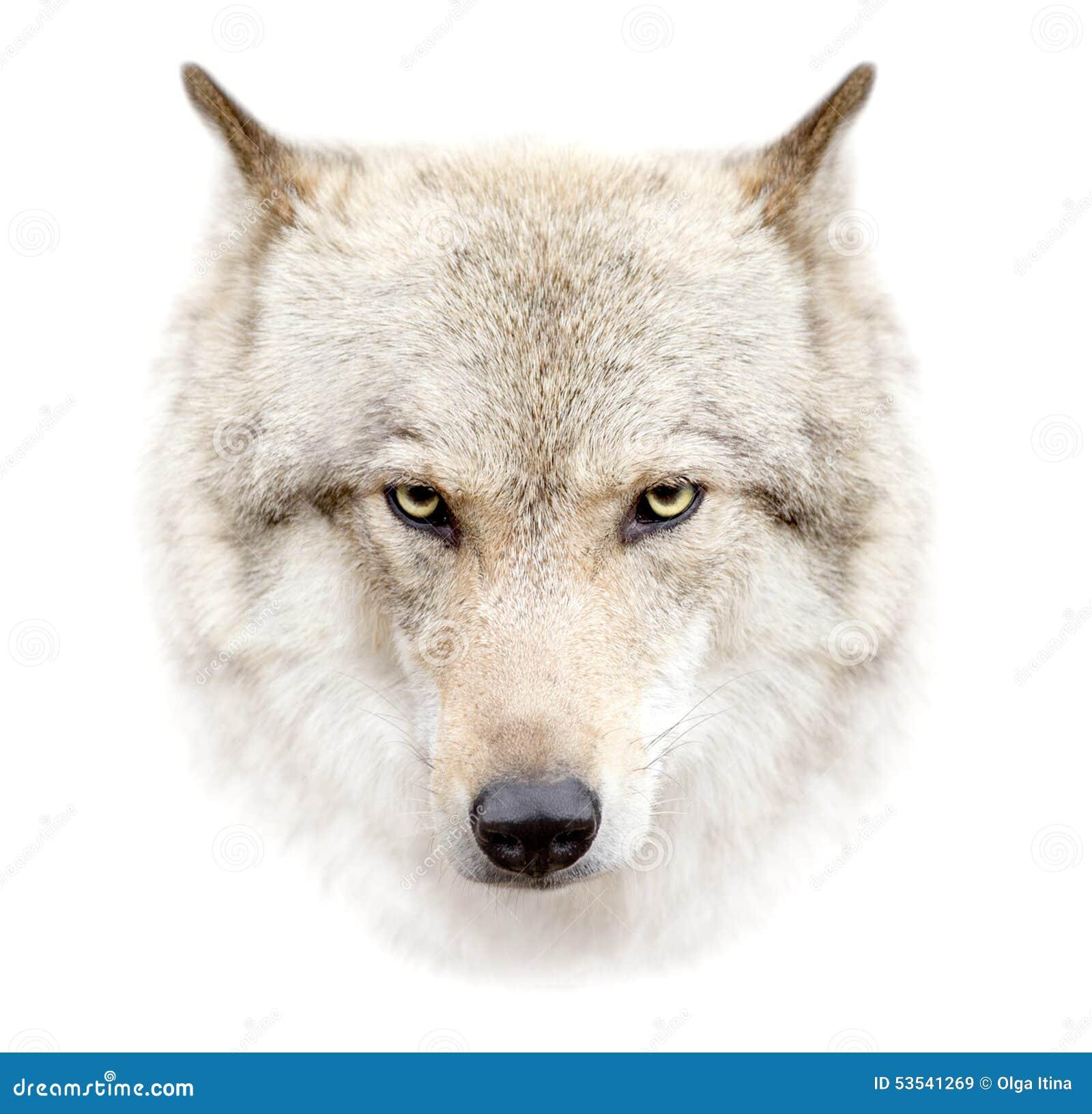 Wolfsgezicht op witte achtergrond