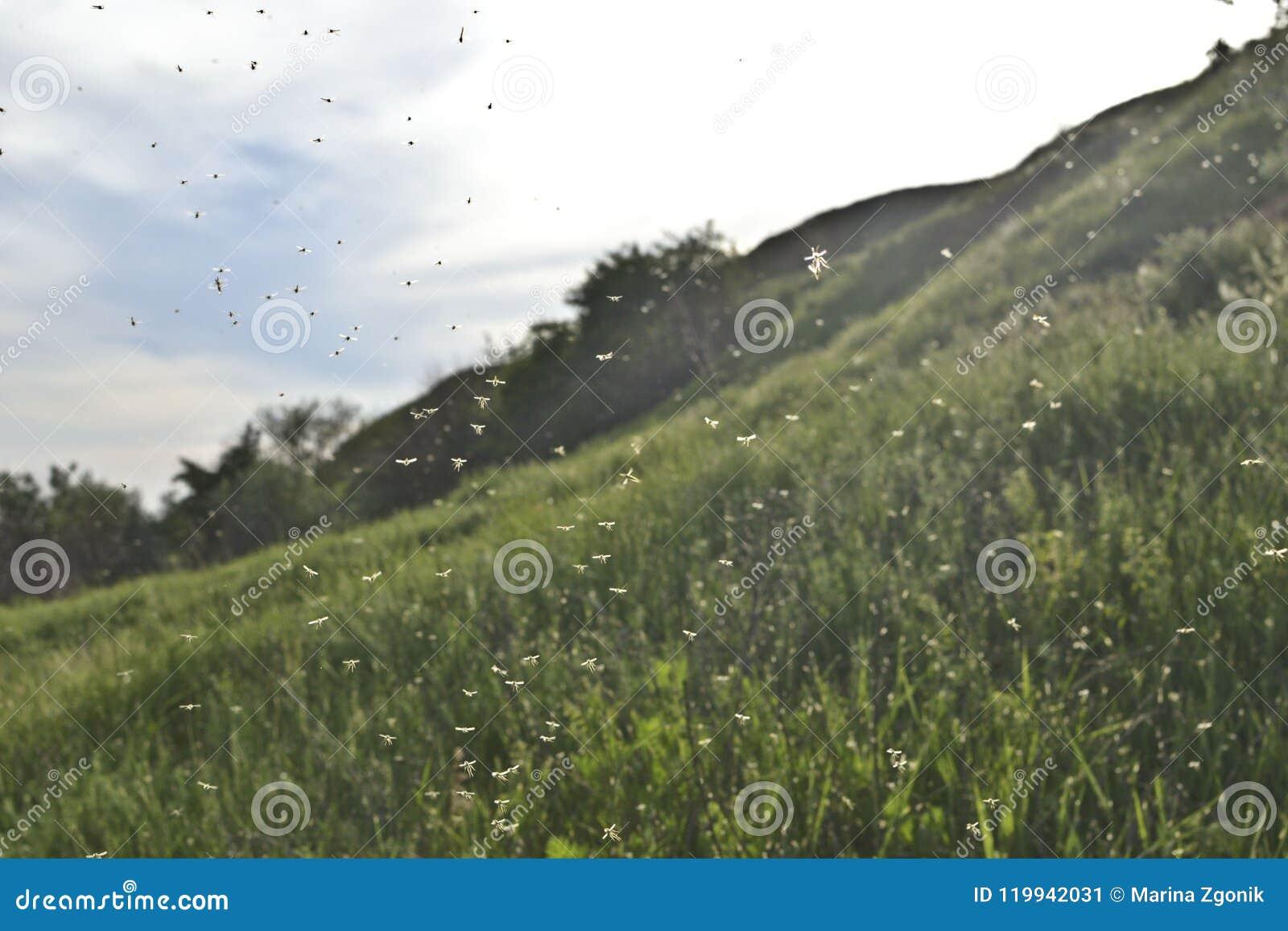 Wolk van insecten