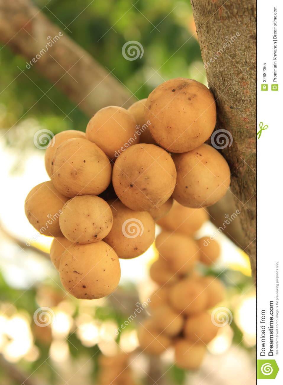 Wollongong ,Fruit Thailand. Royalty Free Stock Photo - Image ...
