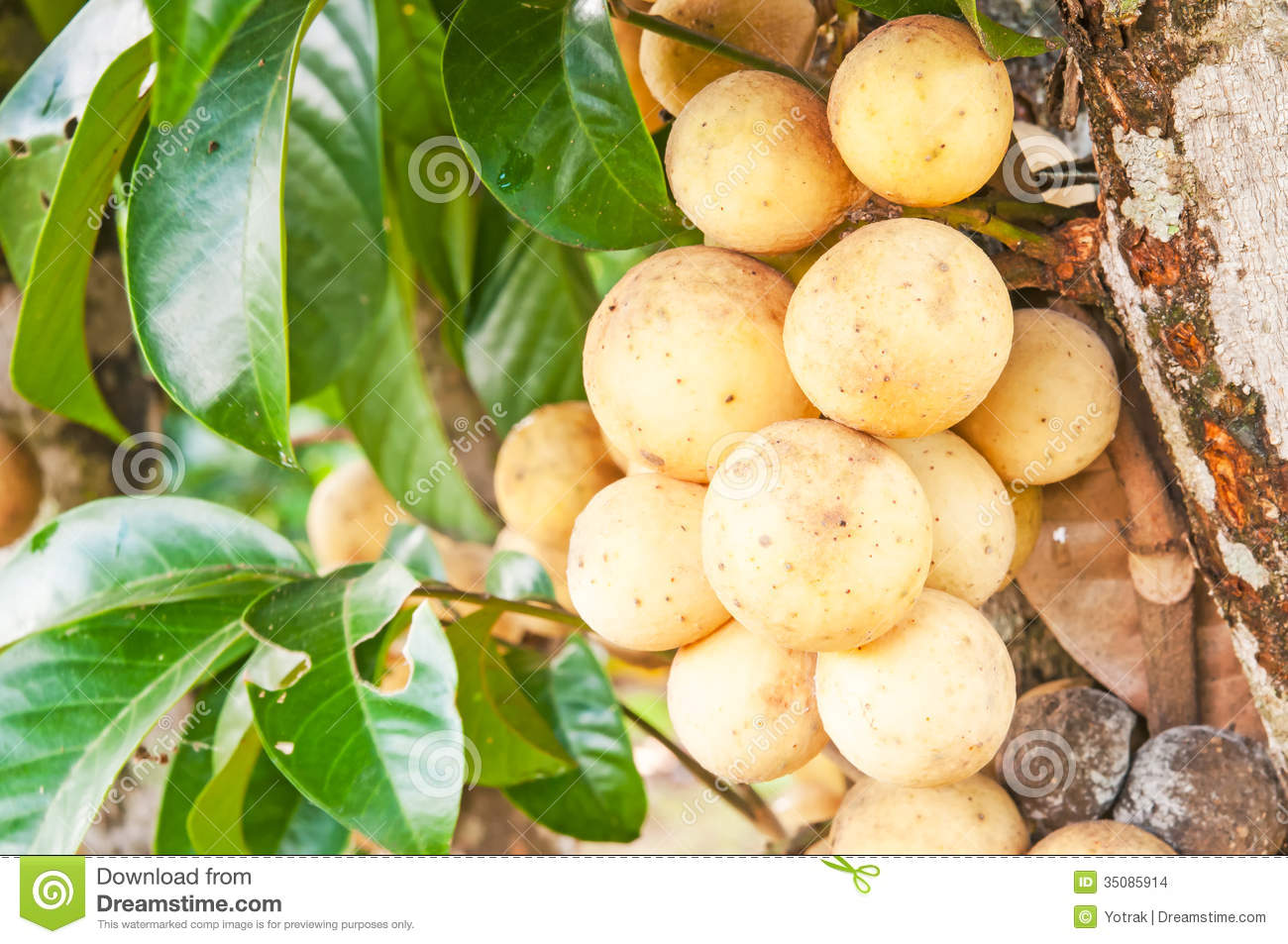 Wollongong Tropical Fruit Stock Images - Image: 35085914