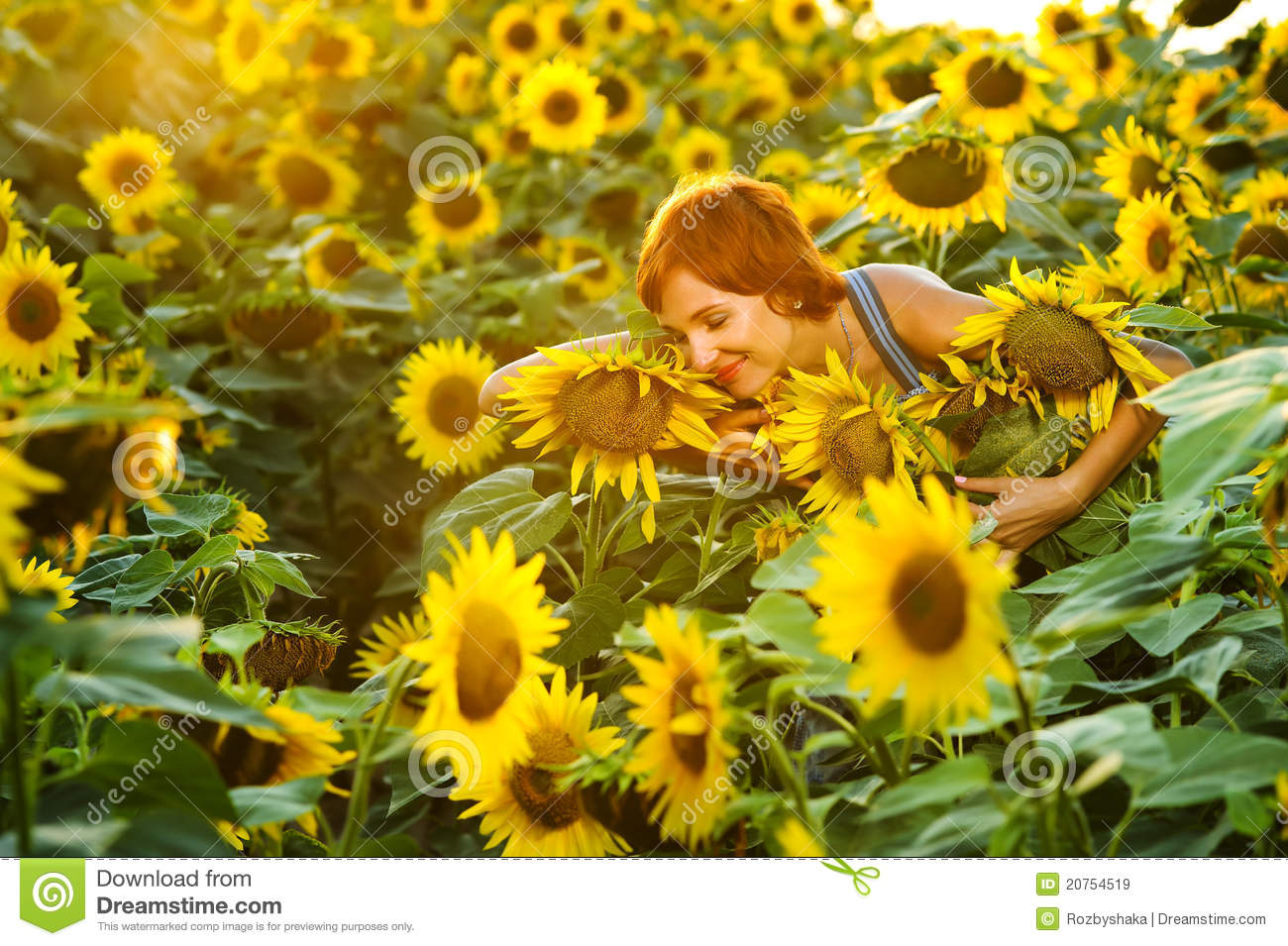 sunflower field picture blooming - photo #8