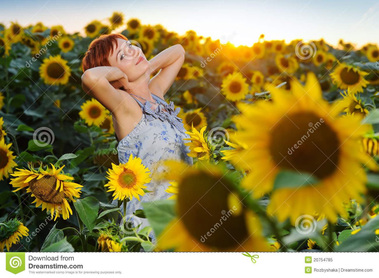 sunflower field picture blooming - photo #46