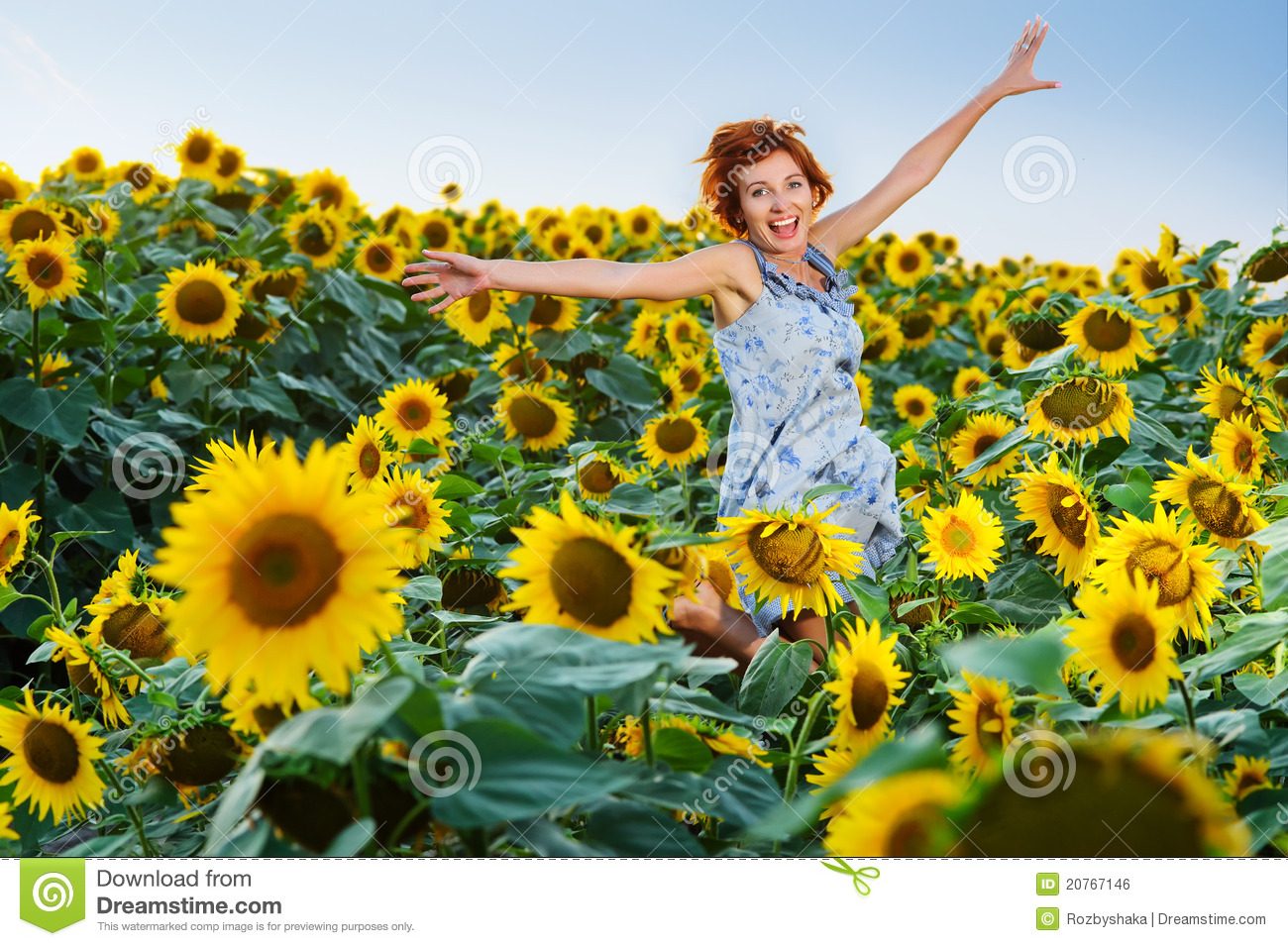 sunflower field picture blooming - photo #47