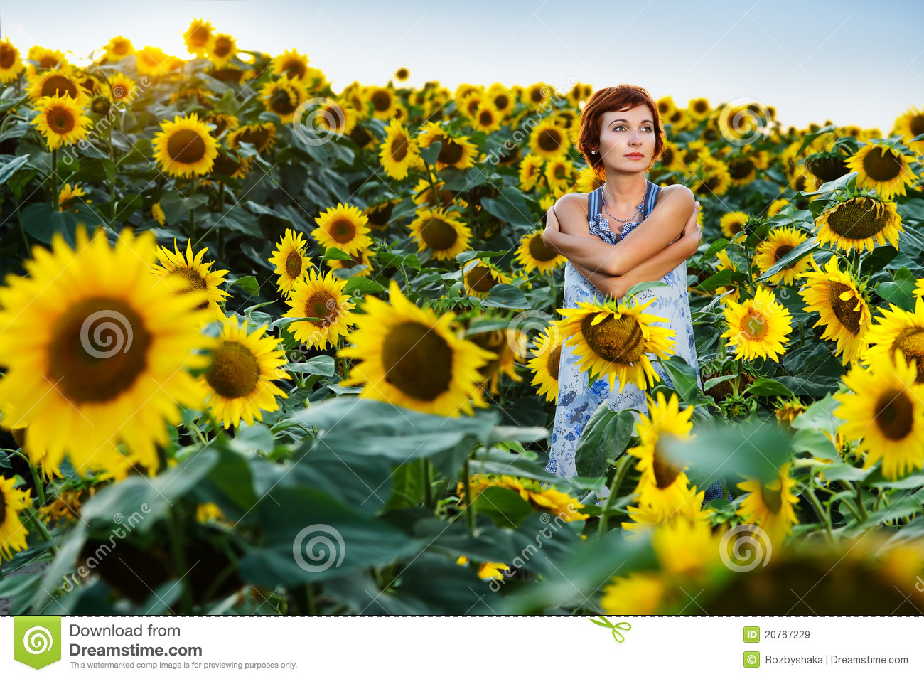 sunflower field picture blooming - photo #40