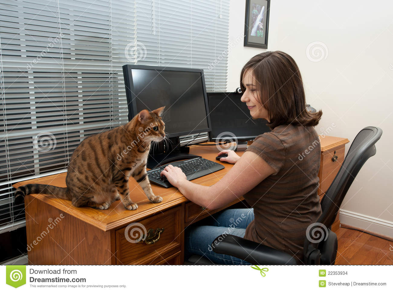 Woman And Cats At Computer Desk Stock Images Image 22353934