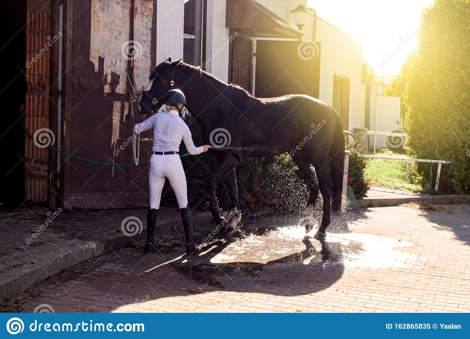 Woman Cooling Down Chestnut Horse In A Barn Stock Image ...
