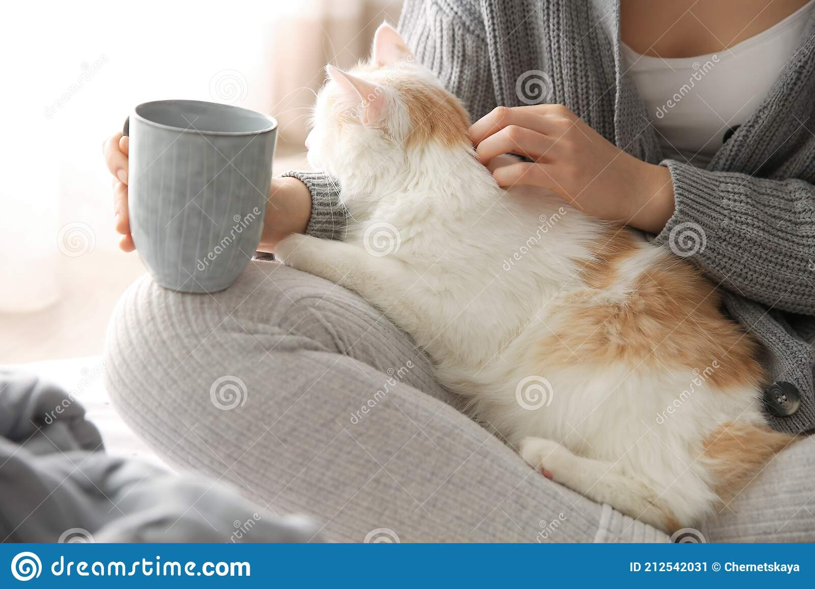 2 691 Cat Tea Photos Free Royalty Free Stock Photos From Dreamstime