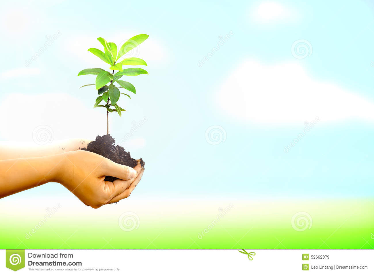 Image result for images- new tree in the world