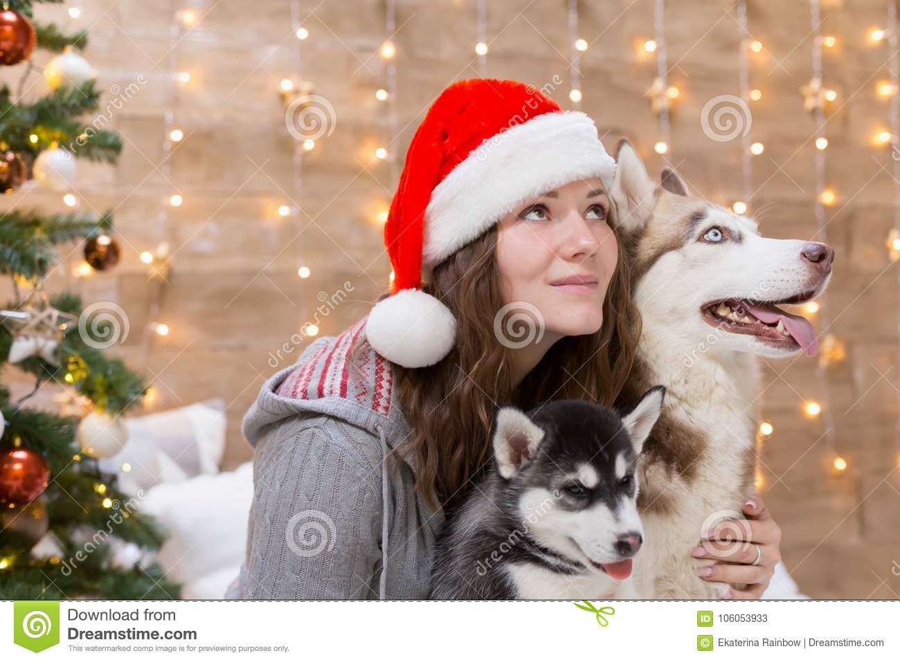 223cb53e7f48d ... amazing background Christmas tree lights. New Year holiday card  calendar. Winter family home. Beautiful animals life. Couple friends Santa  Claus.