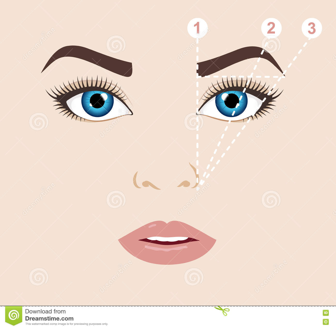 Woman Face And Eyebrow Scheme Mapping. Trimming. Vector Illust ...