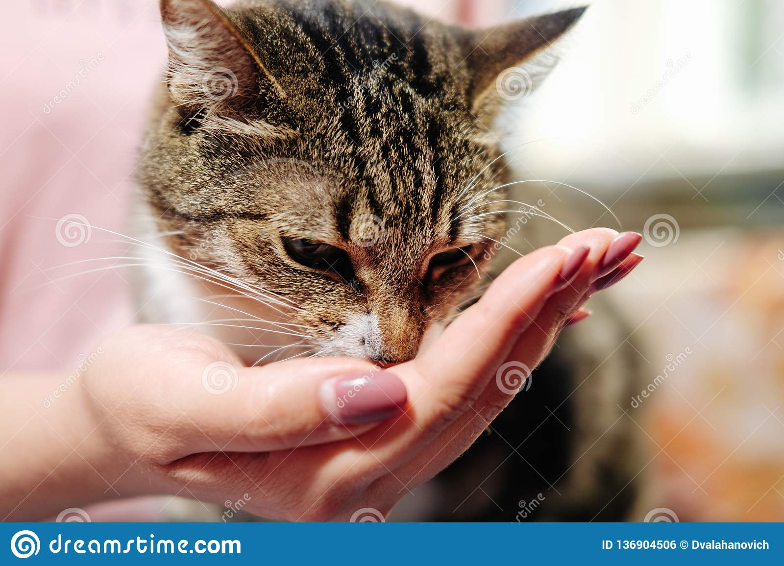 Cat eats from hand of woman