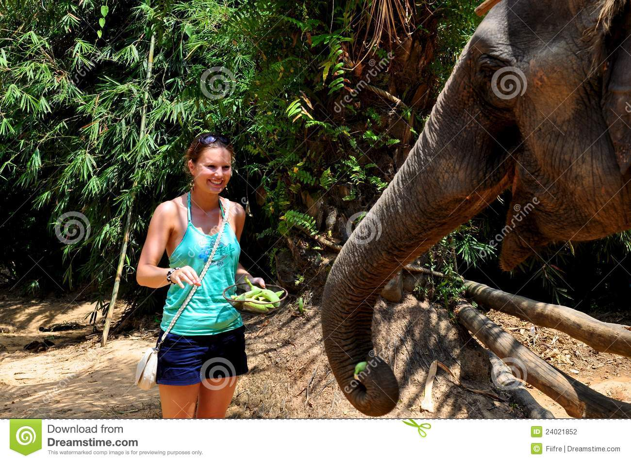 Woman Feeding An Elephant Stock Photography Image 24021852