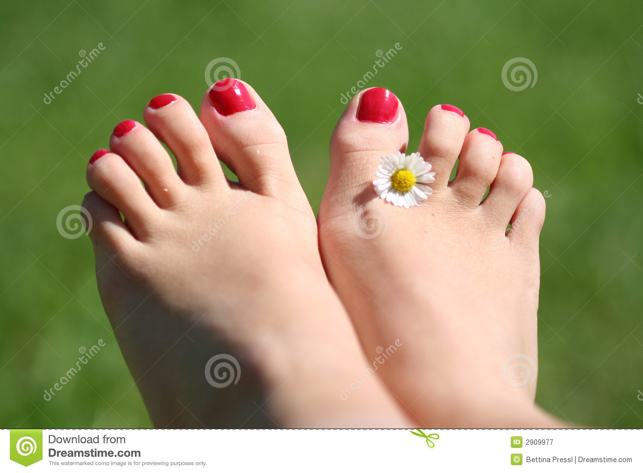 Woman Feet Royalty Free Stock Photography - Image: 2909977