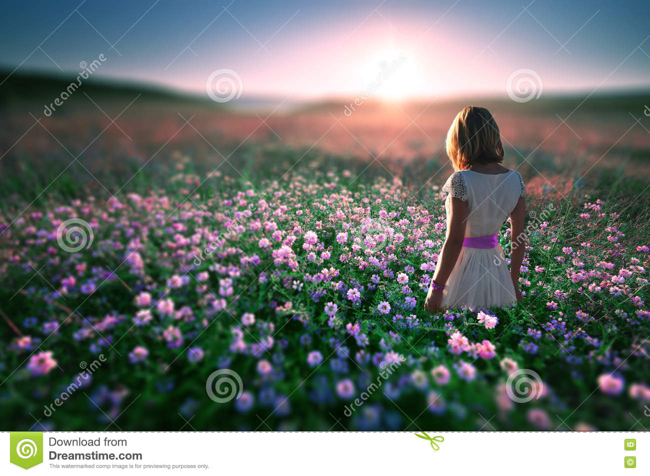 Woman In Field Of Flowers At Sunset Stock Photo - Image ...