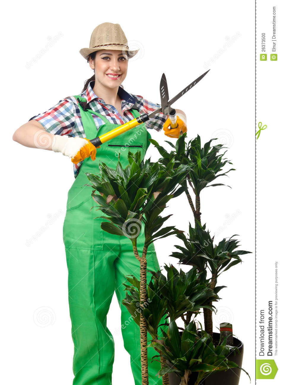 Woman Gardener Trimming Plans Stock Photo Image 26373500