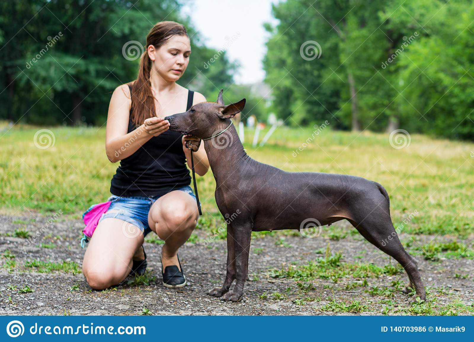 Woman gives a command to her Mexican Hairless Dog. Dog training