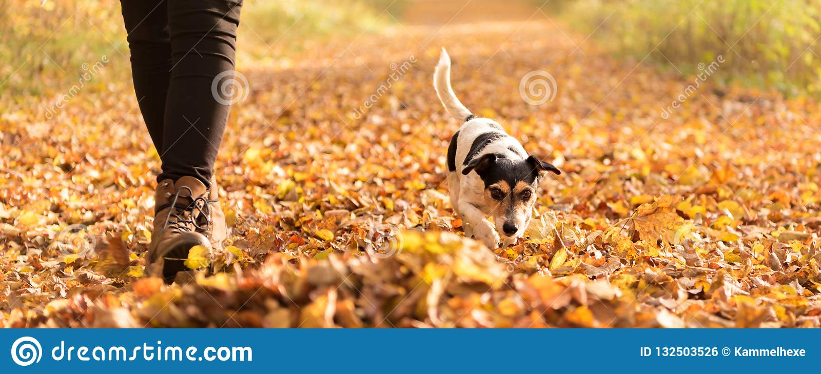 Owner an Jack Russell Terrier in autumn leaves