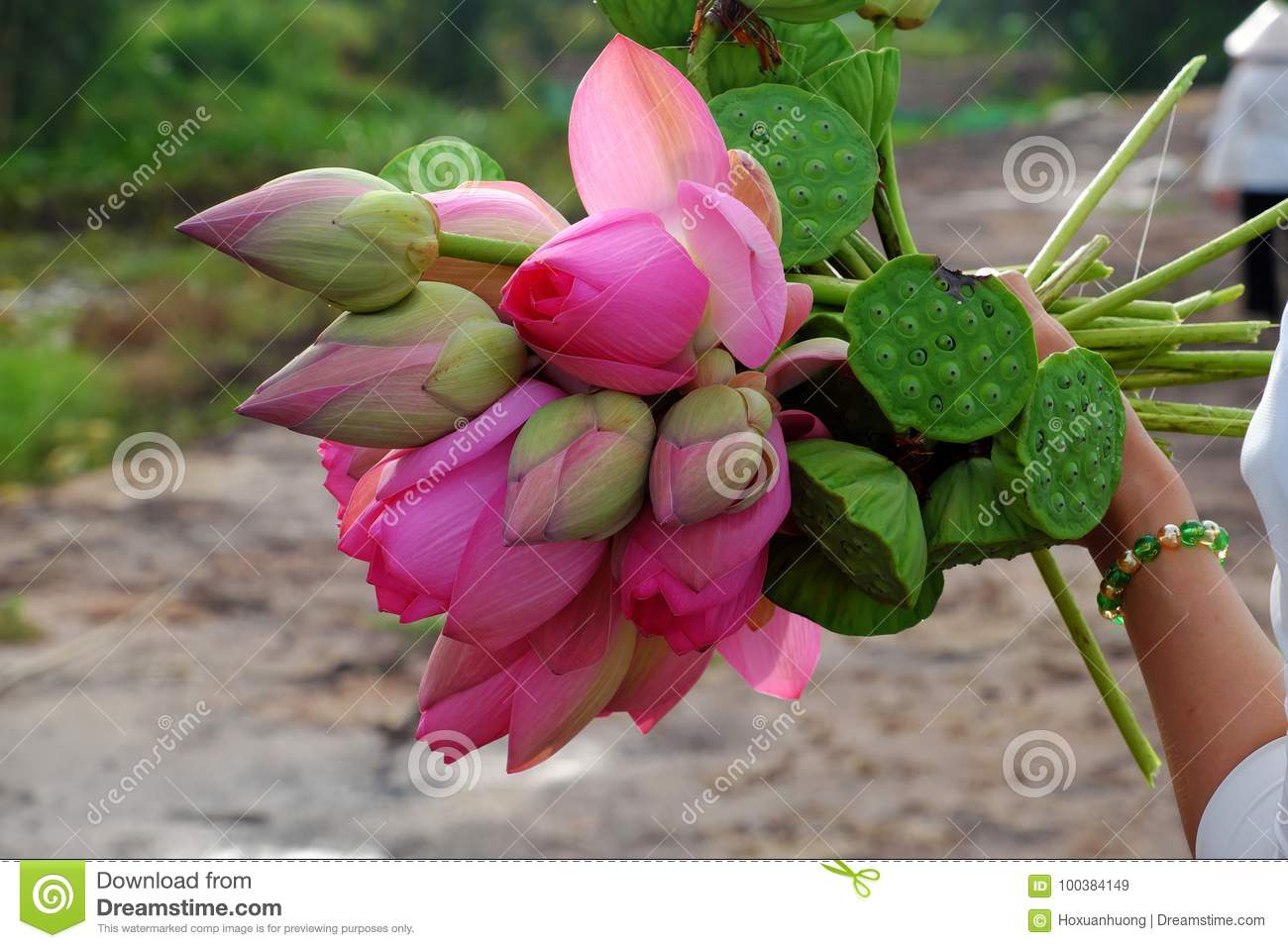 Lotus Flower Bouquet Stock Image Image Of Floral Bunch 100384149
