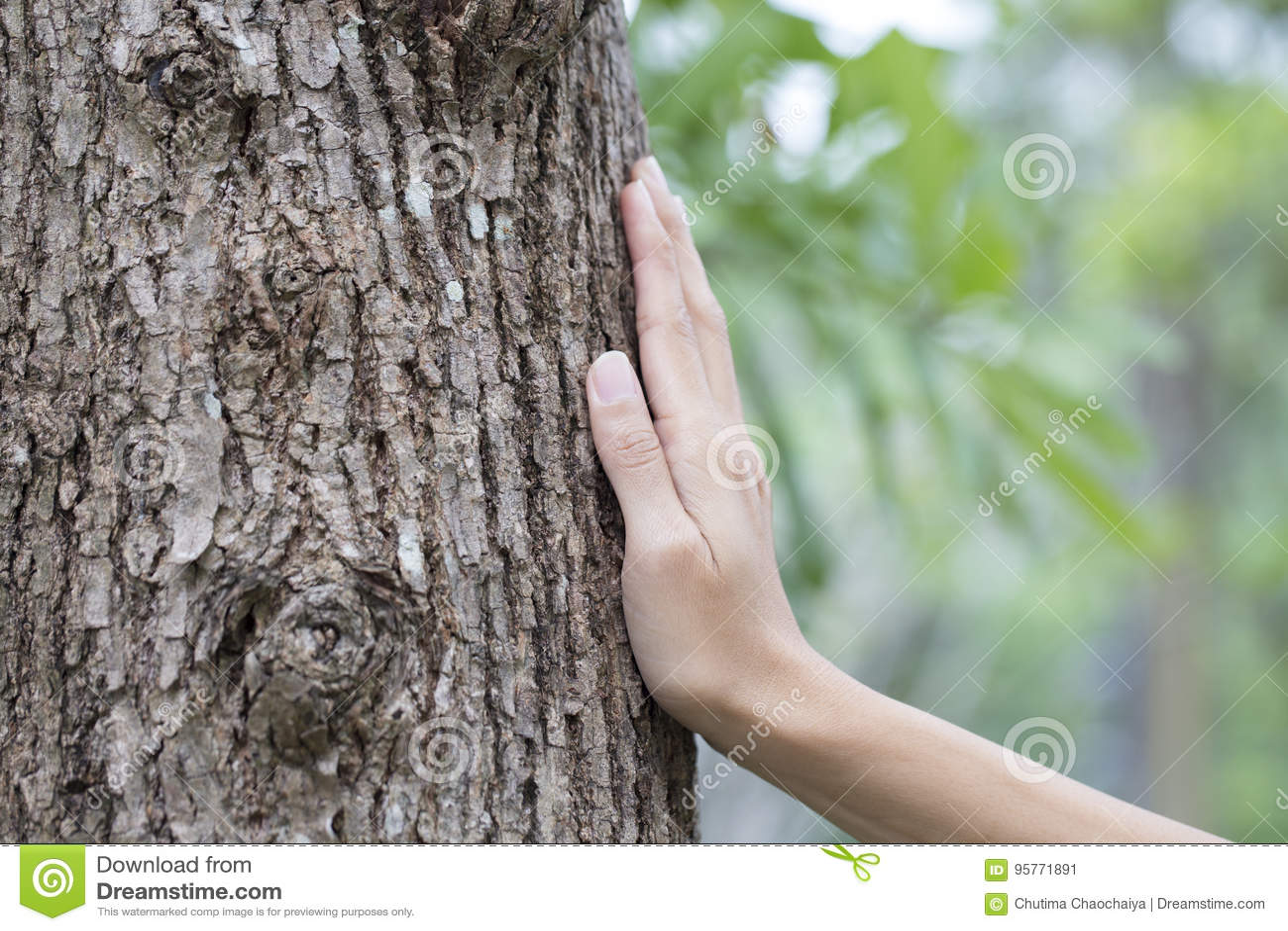 Woman hand touching tree trunk