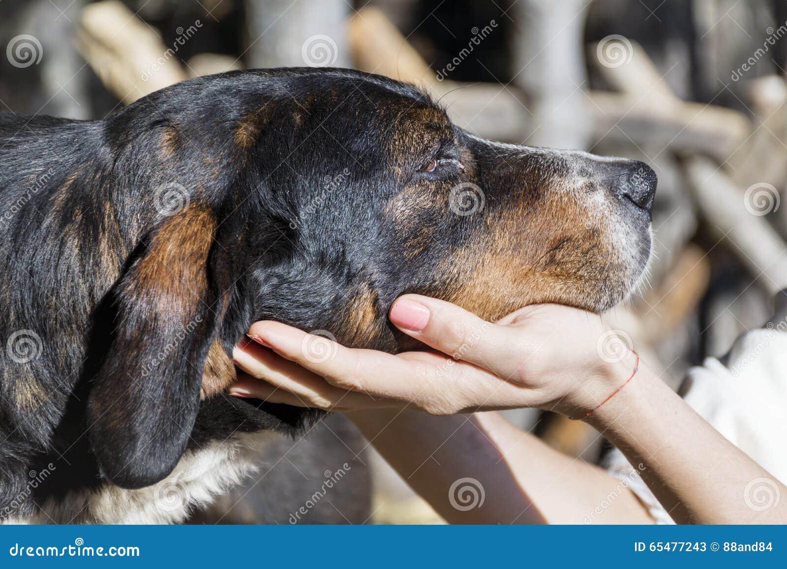 Woman hands fondle a homeless dog