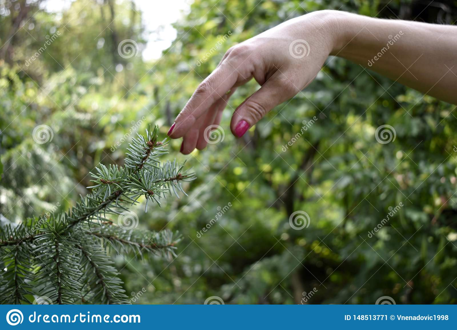 Woman finger touching tree branch