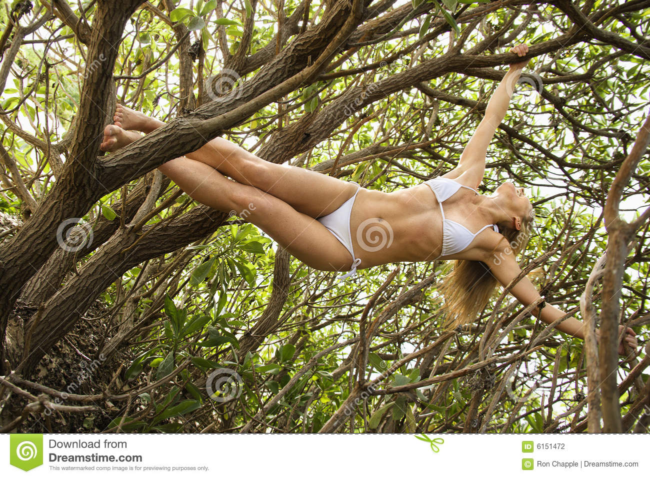 Woman Hanging From Tree Stock Photography Image 6151472