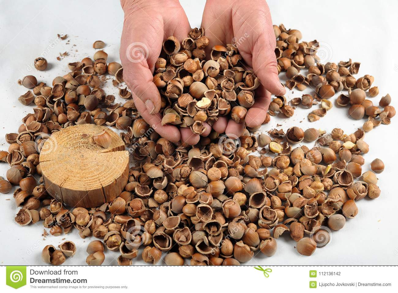 A Woman In Her Hands Cracked Hazelnut Stock Photo - Image of