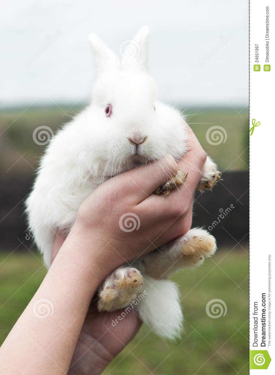 Woman Hold White Rabbit Royalty Free Stock Photography - Image ...