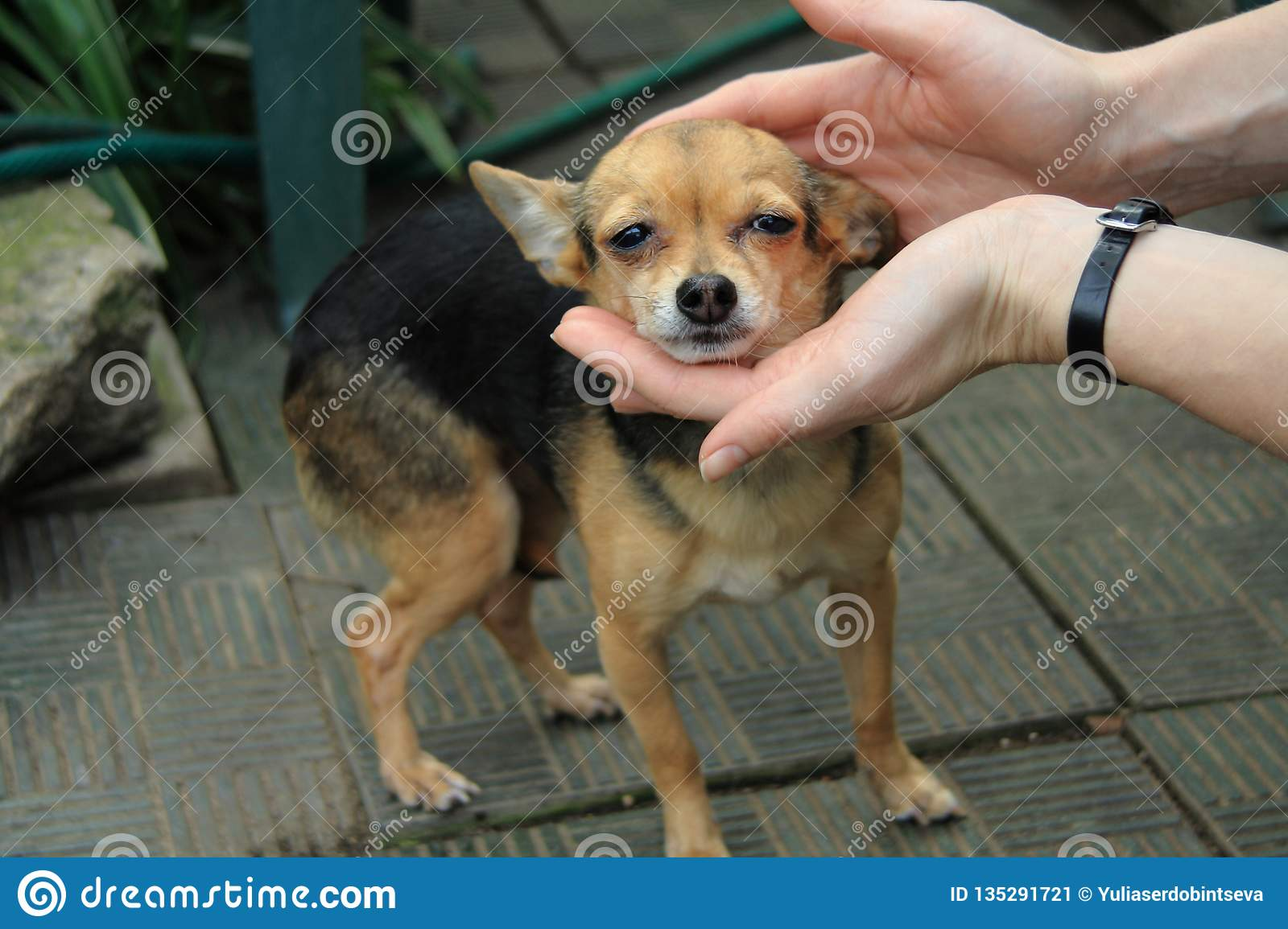 Woman holding the head of a cute little dog